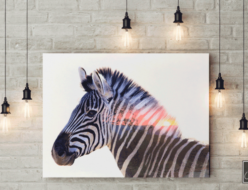 Zebra billede